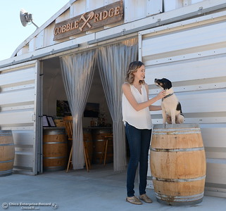 Operations Manager Hailey Hickman pets Rebel while he sits on a barrel seen during a tour of the Cobble Ridge Distillery in Bangor, Calif. Thurs. Sept. 29, 2016. (Bill Husa -- Enterprise-Record)
