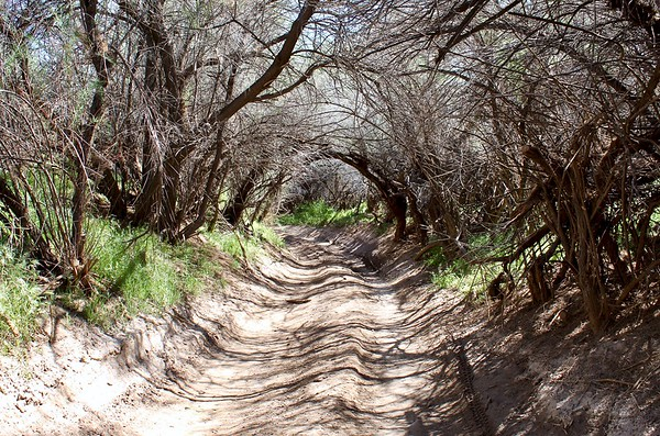 Natural tunnel by the Gila River at Cochran (2019)