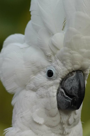 Adorable Cockatoo Photo Shots