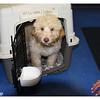 Cody arrival 003-16