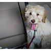 Cody arrival 003-25