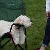 Weston TT at UMASS May 2011 - 0181