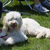 Weston TT at UMASS May 2011 - 0078