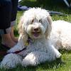 Weston TT at UMASS May 2011 - 0077