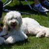 Weston TT at UMASS May 2011 - 0079