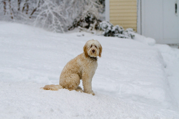 Snowy day Feb 8th 2011