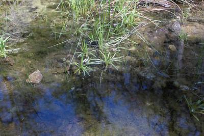 C0754 strap leaves in creek water