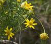 2008/4/24, Pacheco Ridge Trail