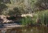 2012/09 Frog Lake cattail progress