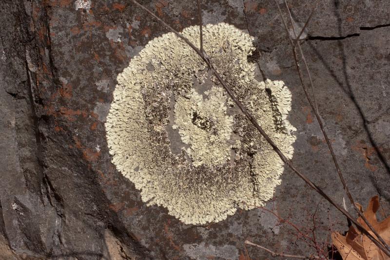 Lichen bullseye in The Narrows.