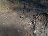 Frog Lake Trail, new area below dam, sticky mud, 2011/3/11.