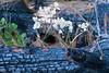 Burned log, flowers, leaves, Ponderosa Trail