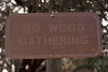 """A, closer:  MPR, just south of Bass Pond, the """"NO WOOD GATHERING"""" sign has faded mostly away."""