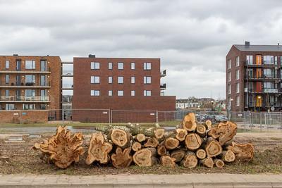 Bomen aan de Parkstraat gerooid