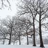 A Spring Blizzard