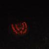 PumpkinBlazeOct2010 047.jpg