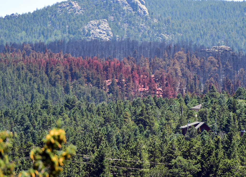 . Layers of color paint the trees in the Nederland burn area.  For more photos and a video, go to www.dailycamera.com. Cliff Grassmick  Staff Photographer  July 14, 2016