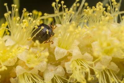 Micro Beetle