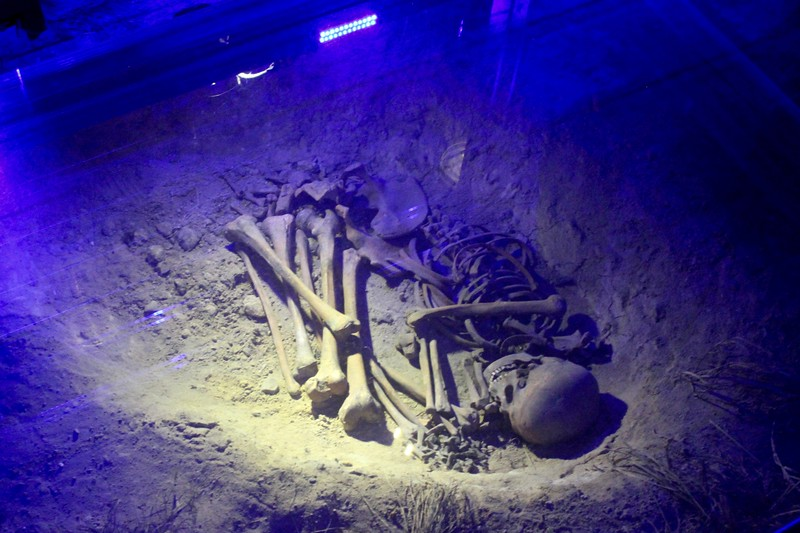 skeleton at Renyk Underground in Krakow, Poland