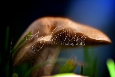 Reflective Mushroom
