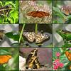20110707NavarreParkButterflies#2