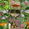 20110708NavarreParkButterflies