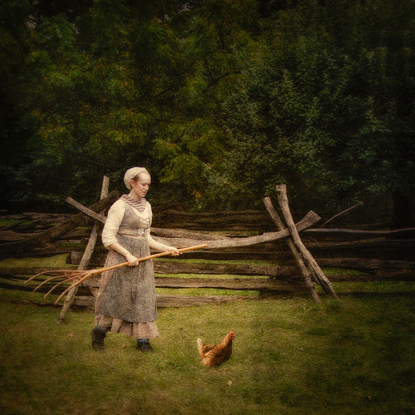 Colonial Era Daily Life: Chasing the Chickens. Philipsburg Manor, Sleepy Hollow, North Tarrytown, Westchester County, New York
