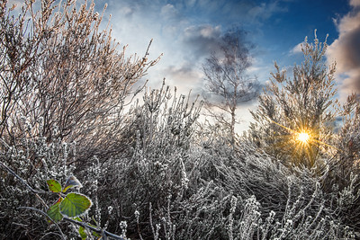 Frosty Heath | Winter Scene in Icy Sunlight Heidelandschap Rijp op de Heide Maashorst Natuurfotografie