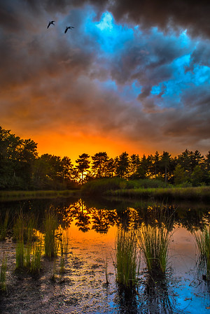 Mid Summer Nights | Fire in Stormy Dramatic Sky with Trees Reflection in Lake Upcoming Storm Sunset Summer Hot Thunder Clouds Maashorst Woeste Lucht Onweer Wolken Onweerswolken Dutch Netherlands Nature Photography Wall Art Fineart Posters for Sale Free Wallpaper
