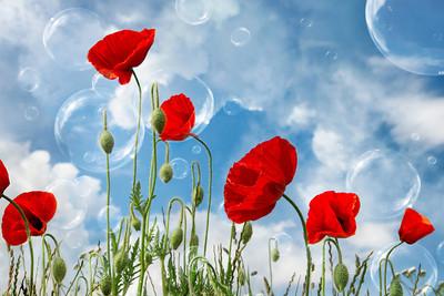 Dream World - Poppies & Bubbles