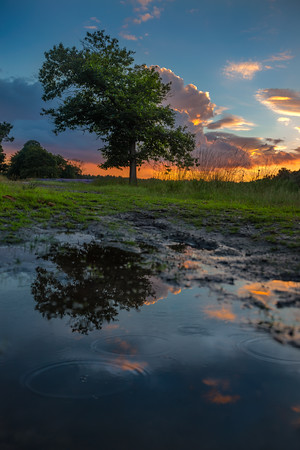 Summer Rain | Summer Rain's a Rare Treat Beautiful Dutch Landscape Find the Good and Praise It Alex Haley Maashorst Zomer Heide Landschap Fotografie
