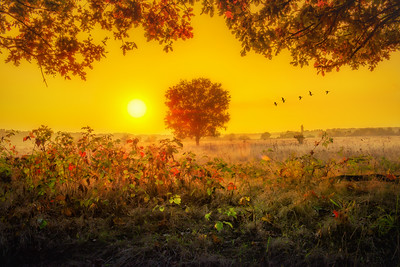Voyage of Dreams | Flock of Geese Heading South Homebound in Beautiful Colorful Foggy Warm Dutch Autumn Landscape at Sunset Framed in Foliage Saying Goodbye to Lonely Tree Maashorst Noord Brabant Nederland Landschapsfotografie