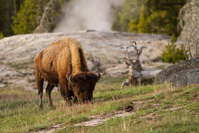 Old Faithful Geyser Basin, Yellowstone National Park