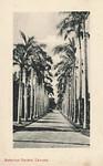 PC_Perris_T1, Edwardian postcard of Botanical Gardens, Calcutta, India by A H Perris