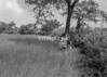 SJ878747B, Ordnance Survey Revision Point photograph of Greater Manchester