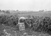 SJ819150X, Ordnance Survey Revision Point photograph in Greater Manchester