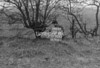 SJ929239B, Ordnance Survey Revision Point photograph in Greater Manchester