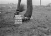 SJ919281B, Ordnance Survey Revision Point photograph in Greater Manchester