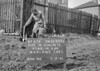 SJ899387A, Ordnance Survey Revision Point photograph in Greater Manchester