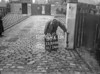 SJ868880A2, Ordnance Survey Revision Point photograph in Greater Manchester