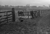 SJ918662B, Ordnance Survey Revision Point photograph in Greater Manchester