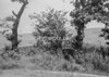 SJ918882W, Ordnance Survey Revision Point photograph in Greater Manchester