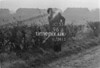 SJ918796A, Ordnance Survey Revision Point photograph in Greater Manchester