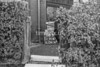 SJ918756B, Ordnance Survey Revision Point photograph in Greater Manchester