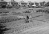 SJ908748B, Ordnance Survey Revision Point photograph in Greater Manchester