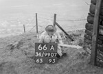 SD990766A, Man marking Ordnance Survey minor control revision point with an arrow in 1950s