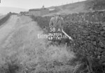 SD990658A2, Man marking Ordnance Survey minor control revision point with an arrow in 1950s