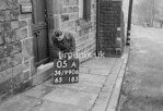 SD990605A2, Man marking Ordnance Survey minor control revision point with an arrow in 1950s