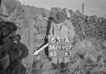 SD990763A, Man marking Ordnance Survey minor control revision point with an arrow in 1950s