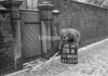 SD860928B, Ordnance Survey Revision Point photograph in Greater Manchester
